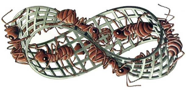paradossi percettivi,topologia,escher